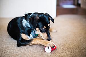 chien jouet morsure