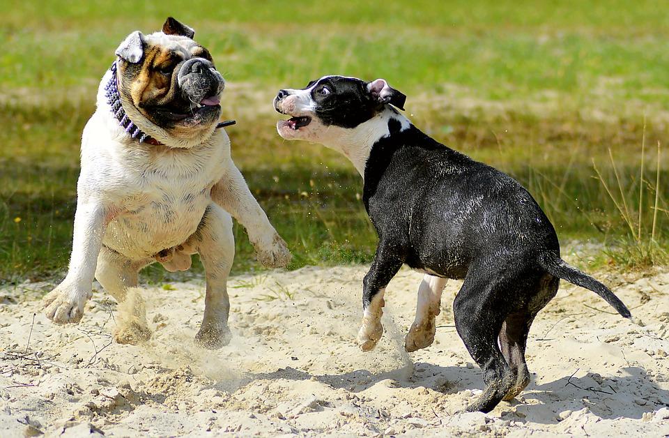 chien jeu sociabilisation
