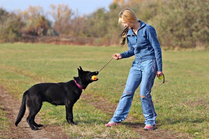 jeu chien respect éducation